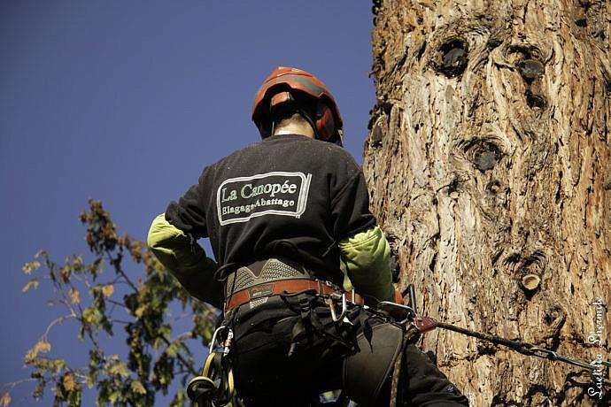 Reportage Photo en extérieur au pied du Séquoia géant