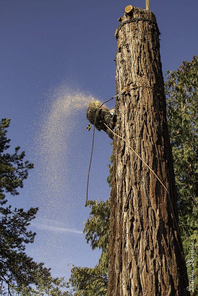 Reportage photo en exterieur au pied du sequoia geant