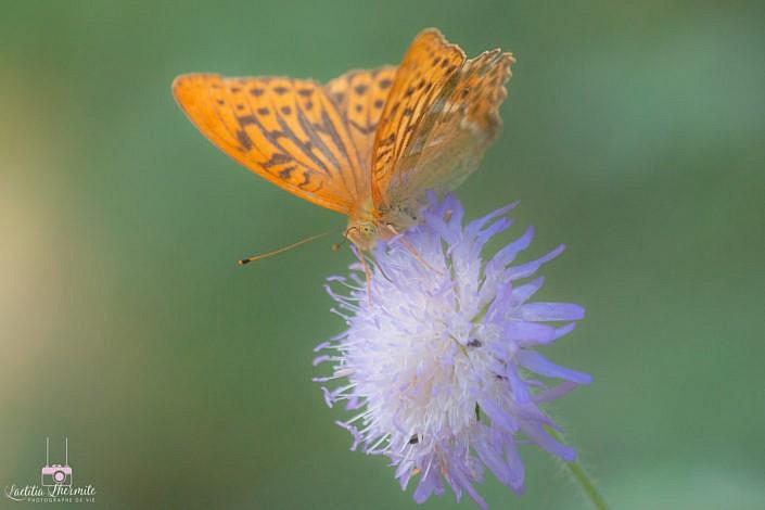 Papillon orangé magique