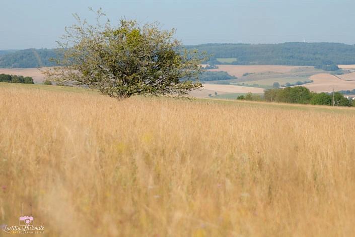 ARbre perdu au milieu de la prairie