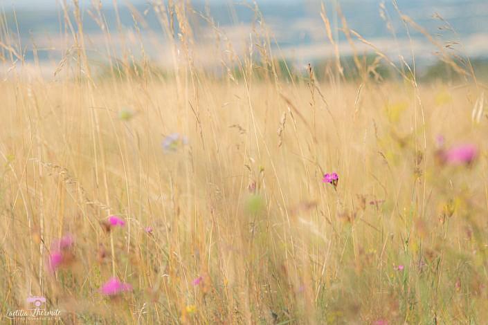 Prairie colorée